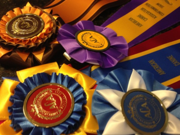 clearwater, kennels, cushing, mn, minnesota, ribboons, dog show, ribbons, clear, water